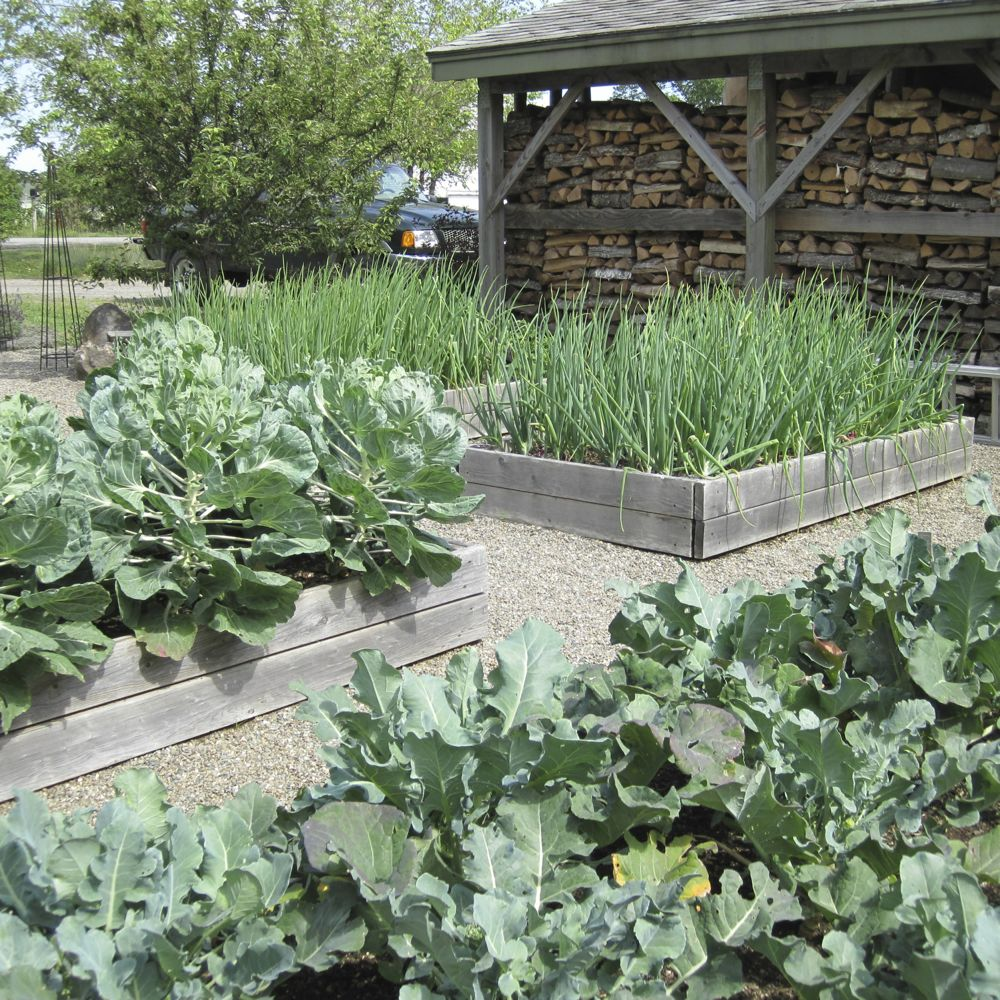 Barn raised beds