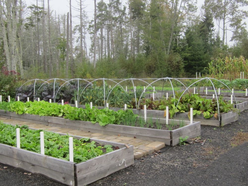 market-raised-beds