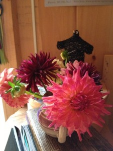 dahlias in gallery