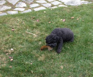 ella eating squirrel