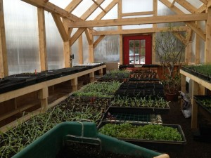greenhouse filling up