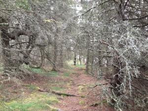 mos head path