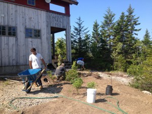 process 5 planting