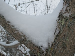 snow in maple