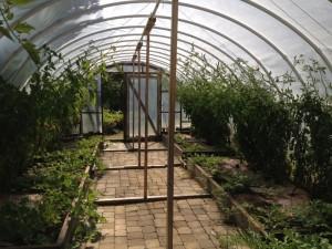 tomato hoop house