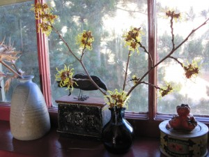 wtich hazel in window